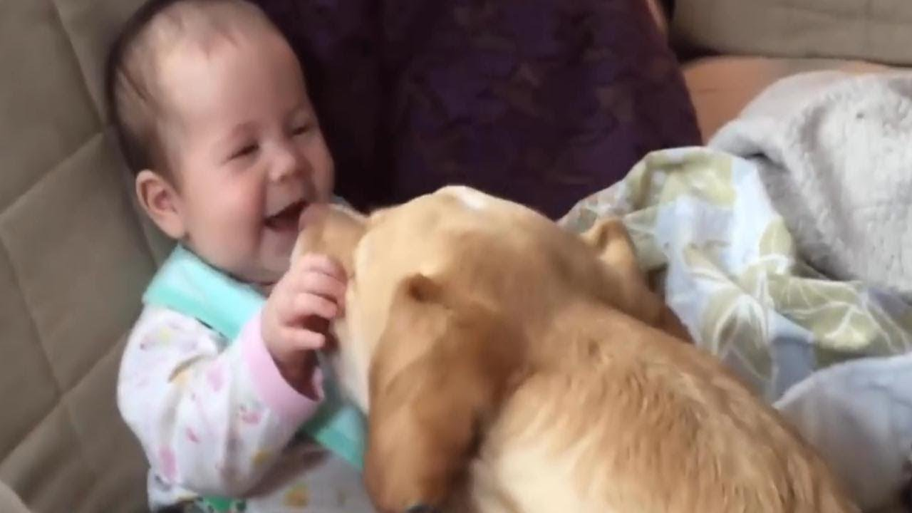 cute babies playing and laughing with dogs - funny baby vines