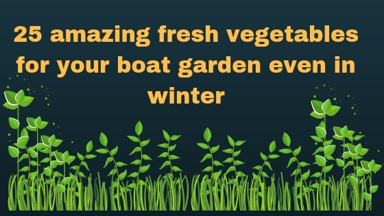 25 amazing vegetables for your boat garden even in winter