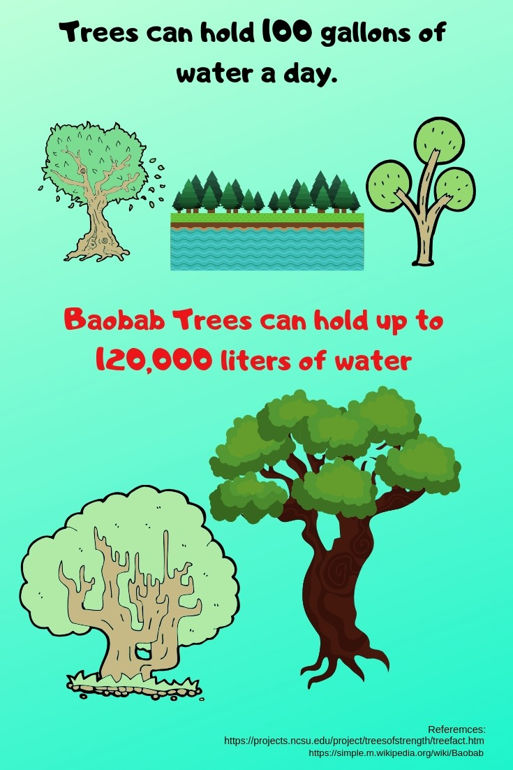 Baobab tree facts