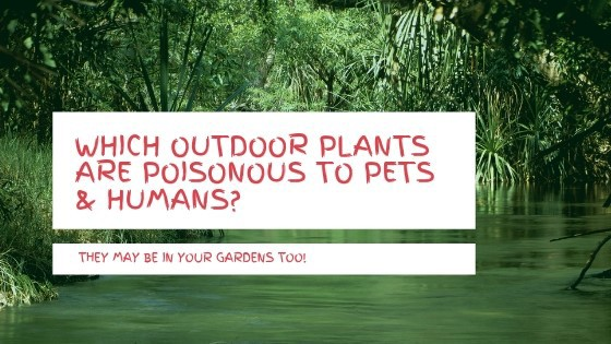 Which outdoor plants are poisonous to dogs & humans?