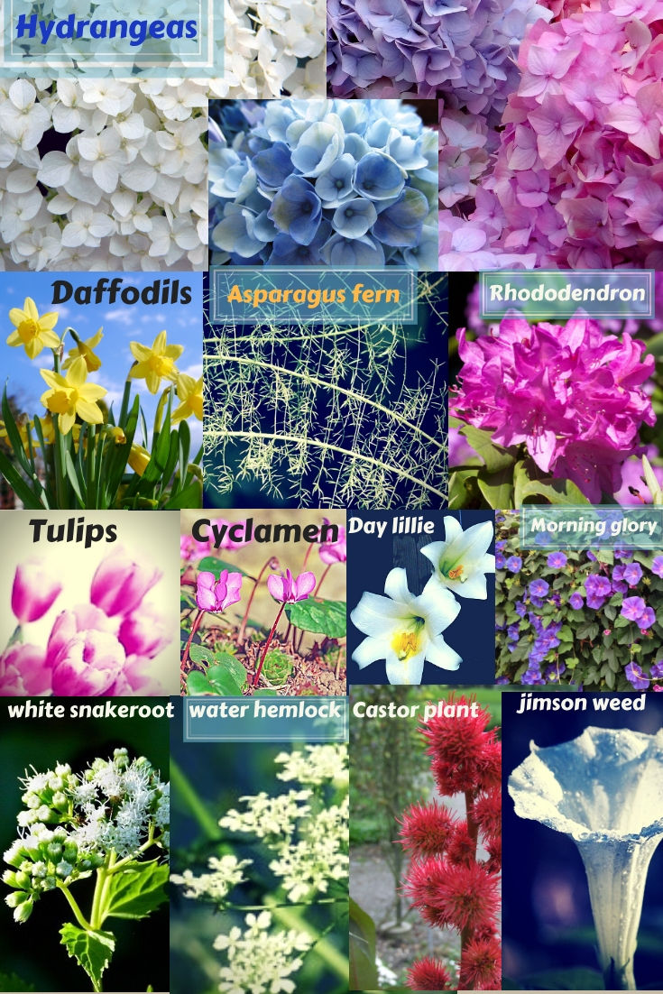 These are the poisonous plants but they are beautiful