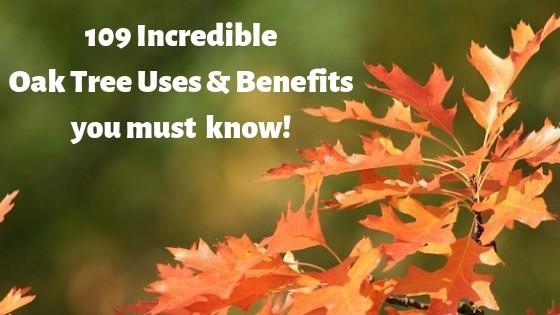 109 Oak tree uses
