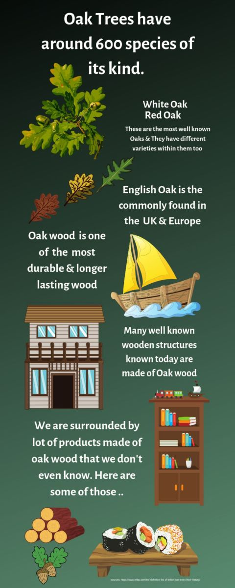 109 Incredible Oak Trees Uses & Benefits you probably didn't