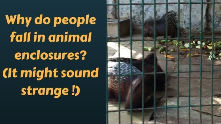 Conditions in an animal enclosure