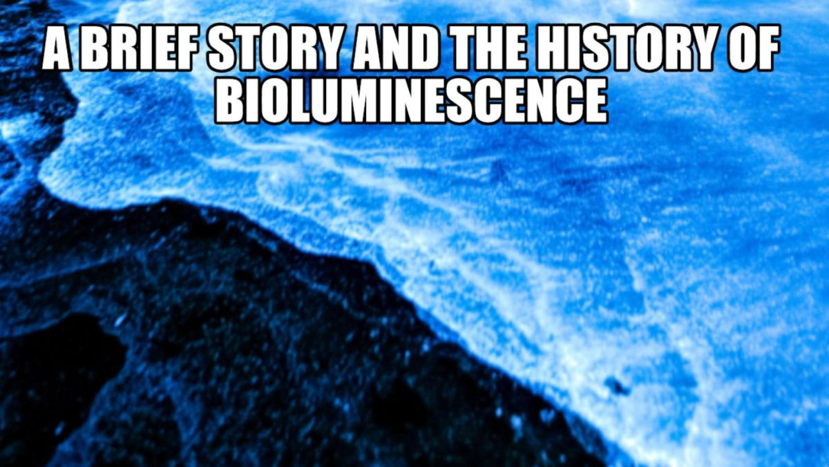 Bioluminescent seawaves