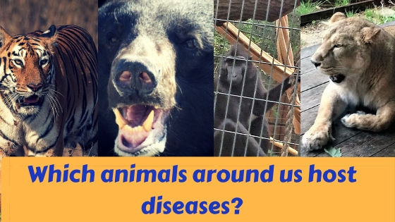 wild animals that could possibly host a disease